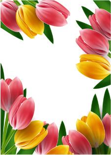 Hd Wallpaper Flower Girl Wedding Bunga Tulip Free Vector Download 166 Free Vector For
