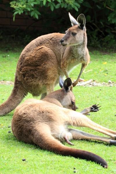 Australia What Food Holiday