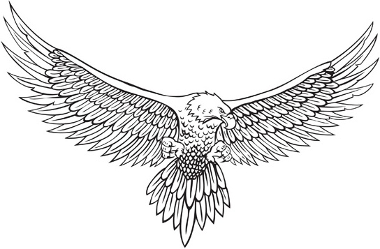 Vector line drawing of the eagle Free vector in
