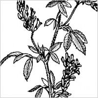 plant shrub outline clip art free