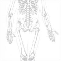 human skeleton unlabeled diagram