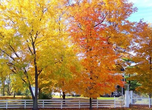 autumn trees free stock