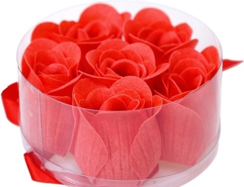 red rose free stock