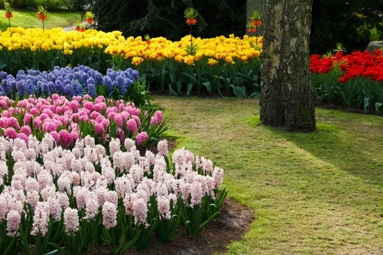 Flower Garden Background Free Stock Photos Download 19 479 Free Stock Photos For Commercial Use Format Hd High Resolution Jpg Images