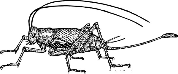 Cricket free vector download (34 Free vector) for