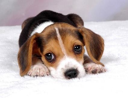 cute pet animals free