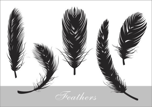 feather free vector download