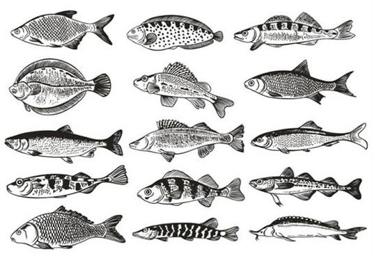 Germany fish monochrome illustrations vector Free vector