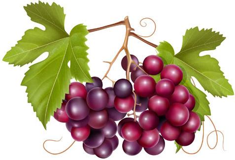 grape wine clip art free vector