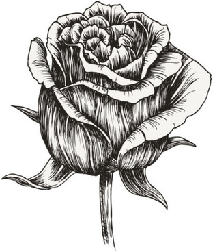hand drawing flowers free