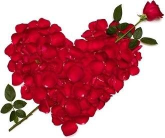 rose flowers free stock