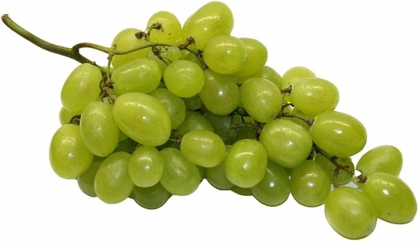 Image result for grapes images