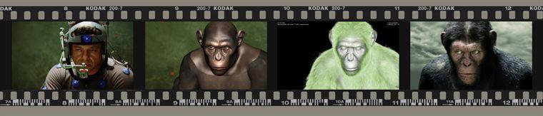 A gauche, le visage d'Andy Serkis, en pleine capture. A droite, le visage final de César après traitement numérique