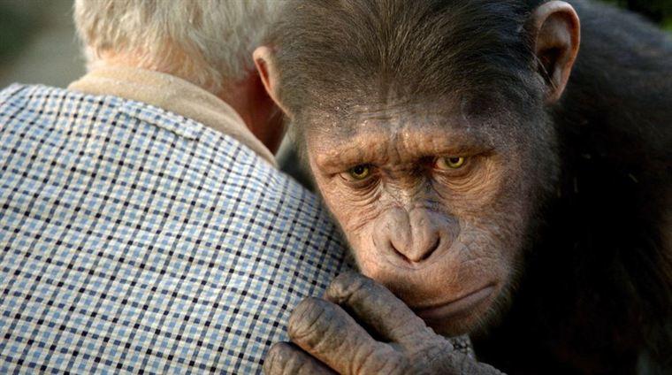 César (animé par Andy Serkis) a été recueilli et élevé par la famille Rodman