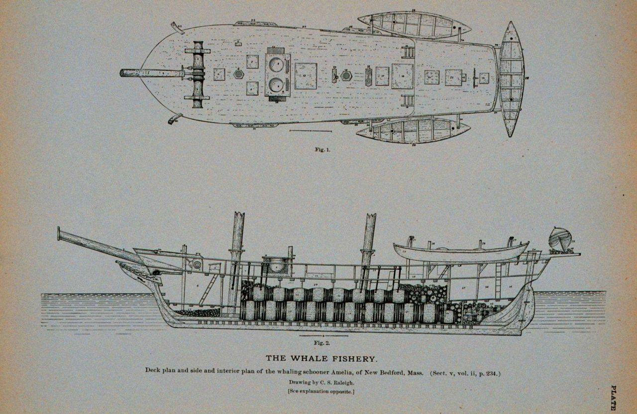 polar bear fur diagram 2001 ford explorer sport trac fuel pump wiring deck plan and side interior of whaling schooner