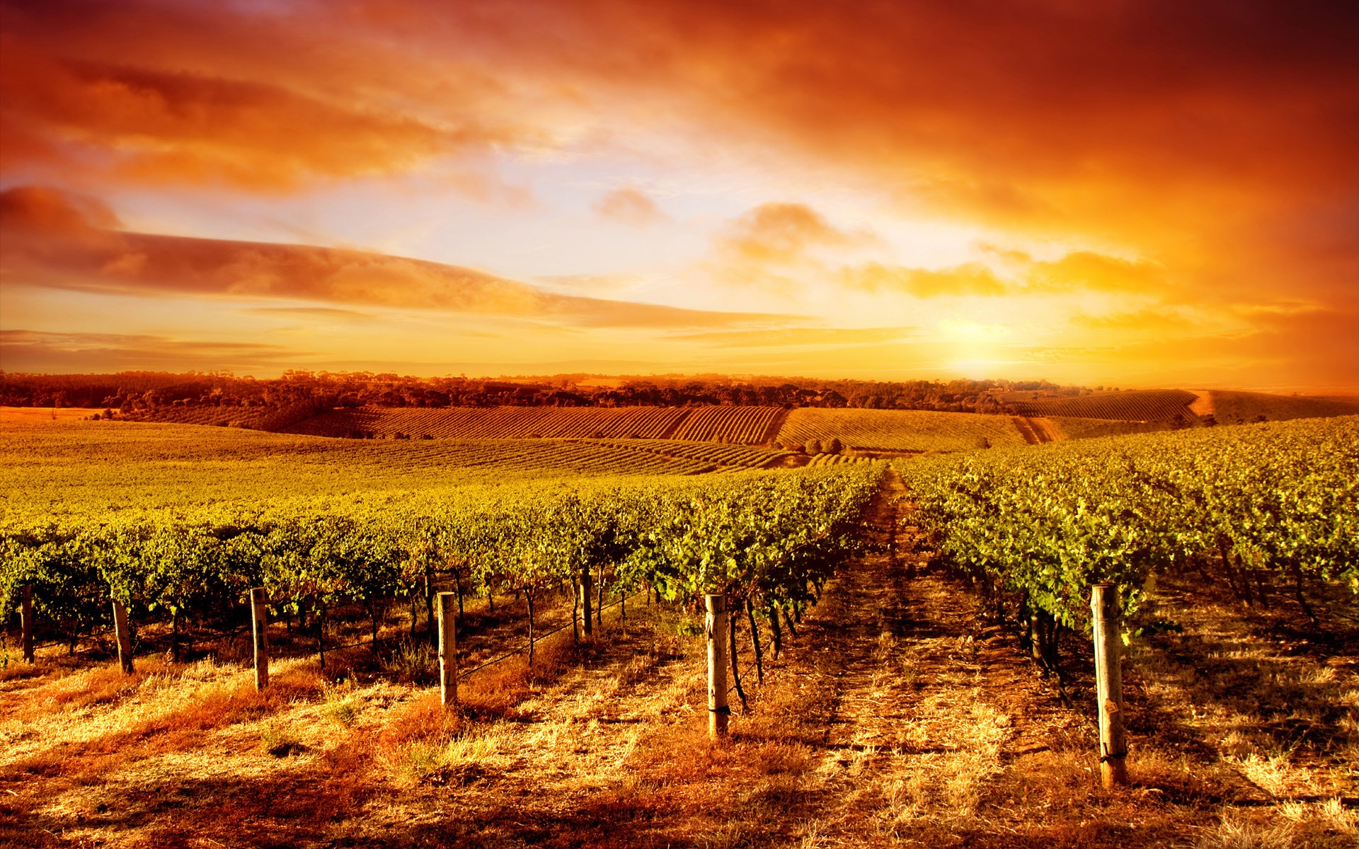 91 Vineyard Hd Wallpapers  Backgrounds  Wallpaper Abyss