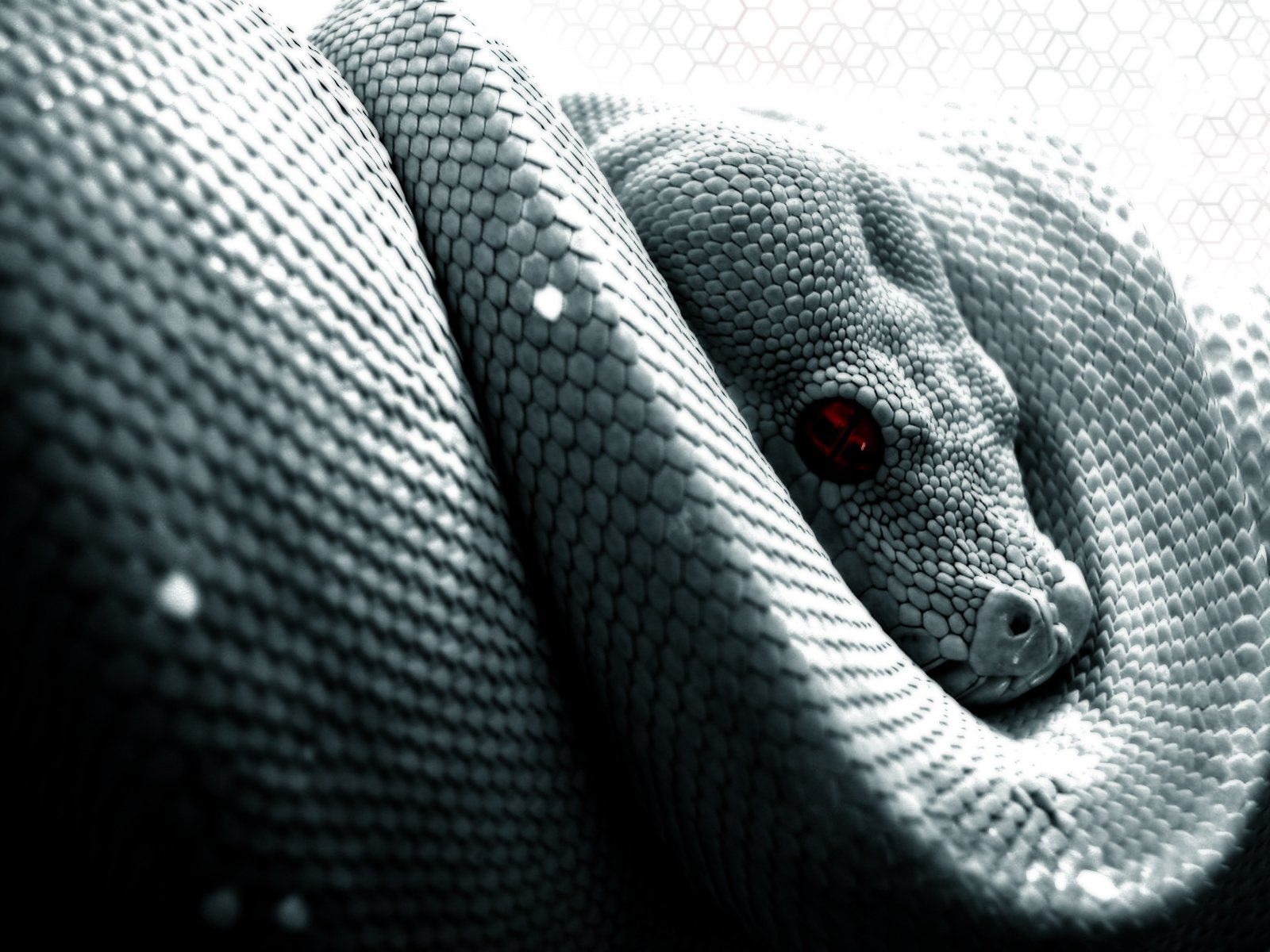 269 reptile hd wallpapers | background images - wallpaper abyss