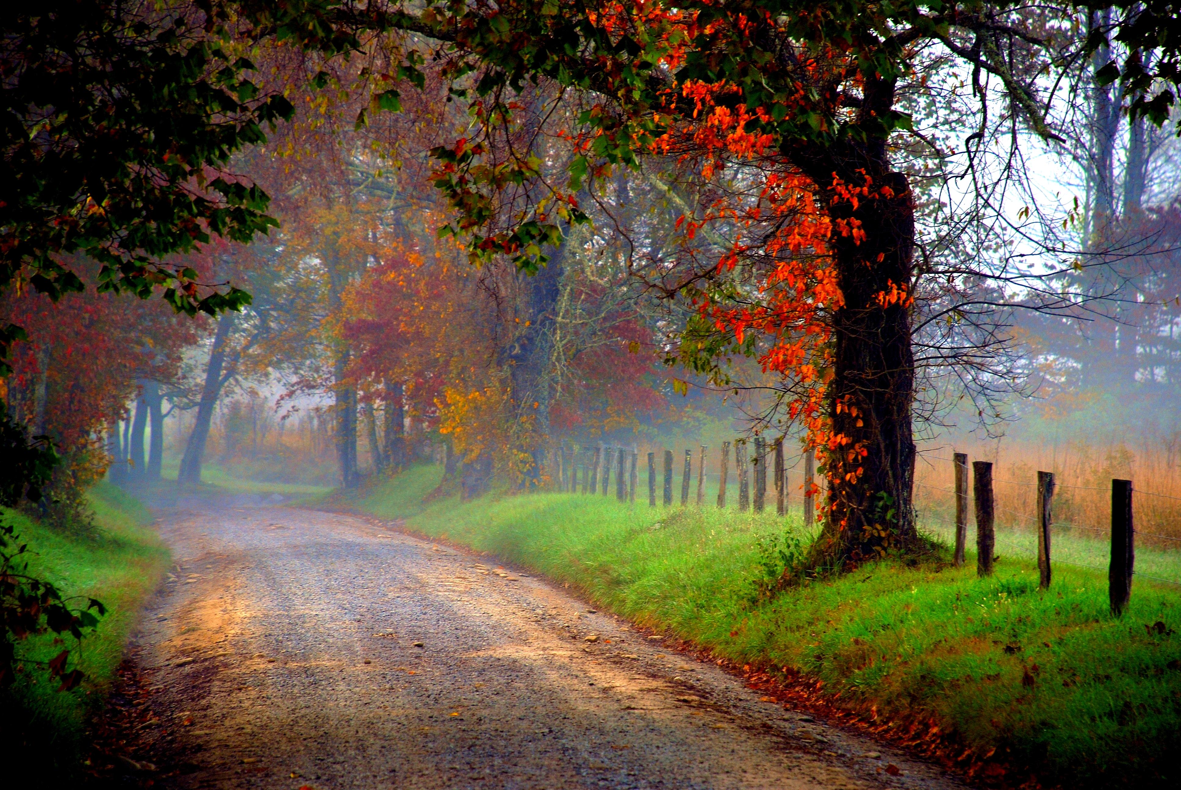 Path 4k Ultra HD Wallpaper  Background Image  3872x2592