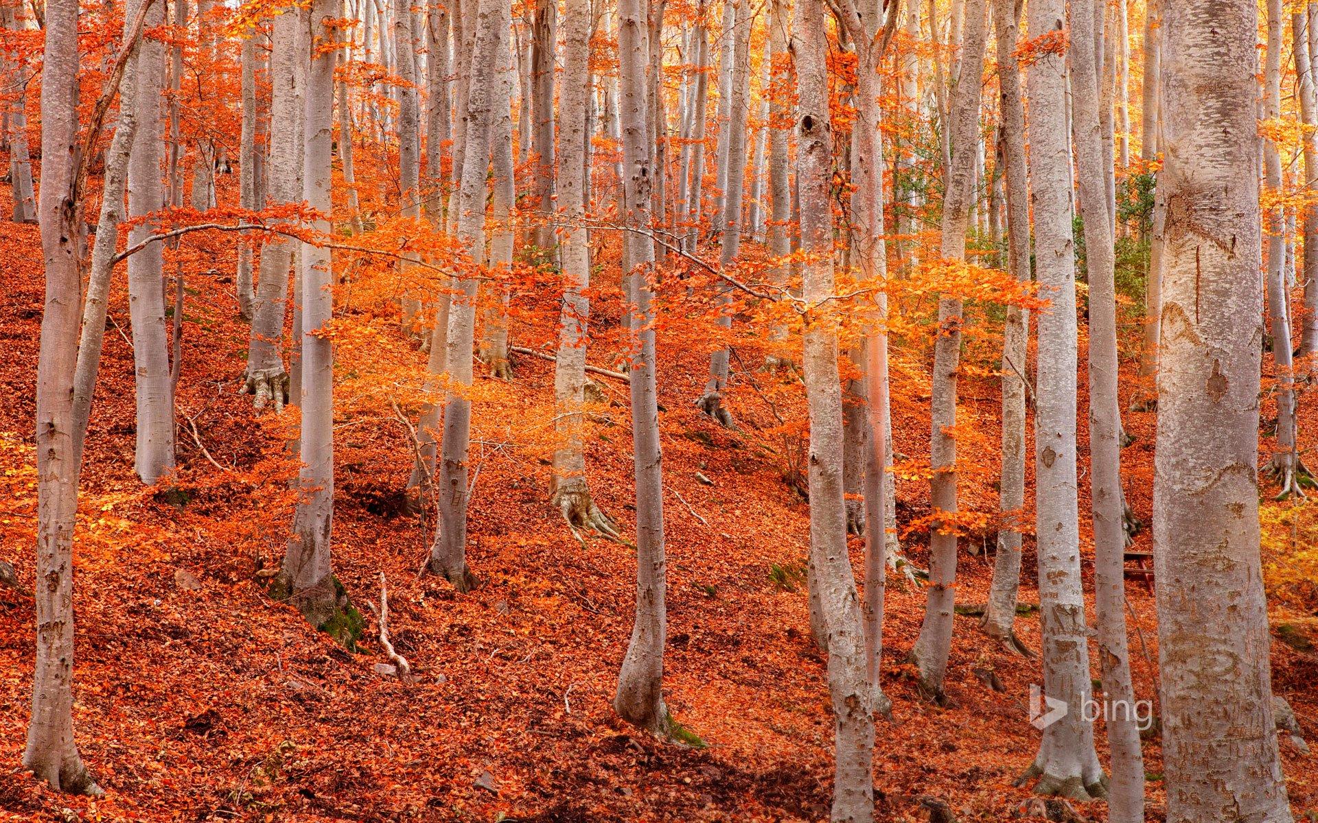 Fall Autumn Iphone Wallpaper Dehesa De Moncayo Natural Park Near Zaragoza Spain Hd