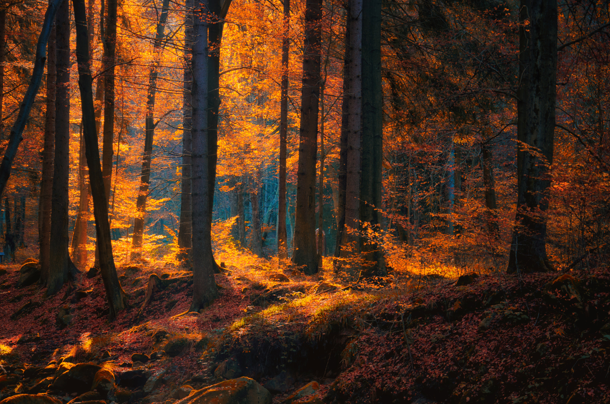 Dark Fall Iphone Wallpaper Autumn Forest Hd Wallpaper Background Image 2048x1356