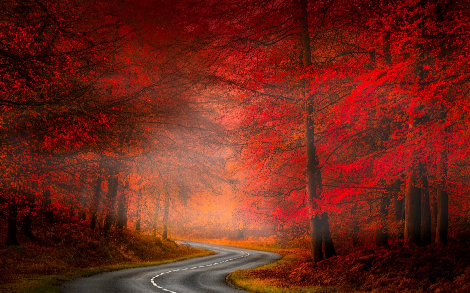 Fall Wallpaper For Large Monitors Misty Autumn Forest Road Hd Wallpaper Hintergrund