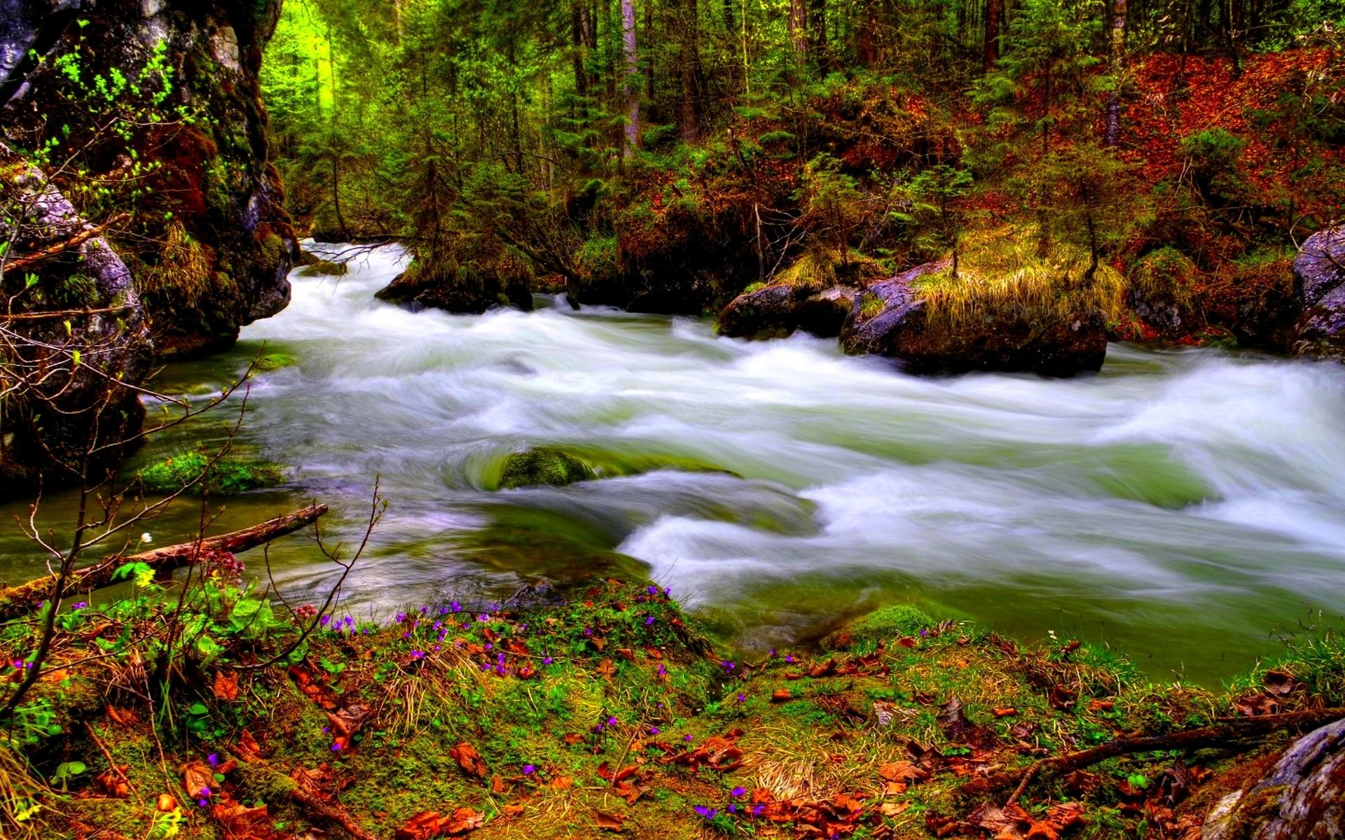 Kuang Si Falls Hd Wallpaper 1920 Stream In Autumn Forest Hd Wallpaper Background Image