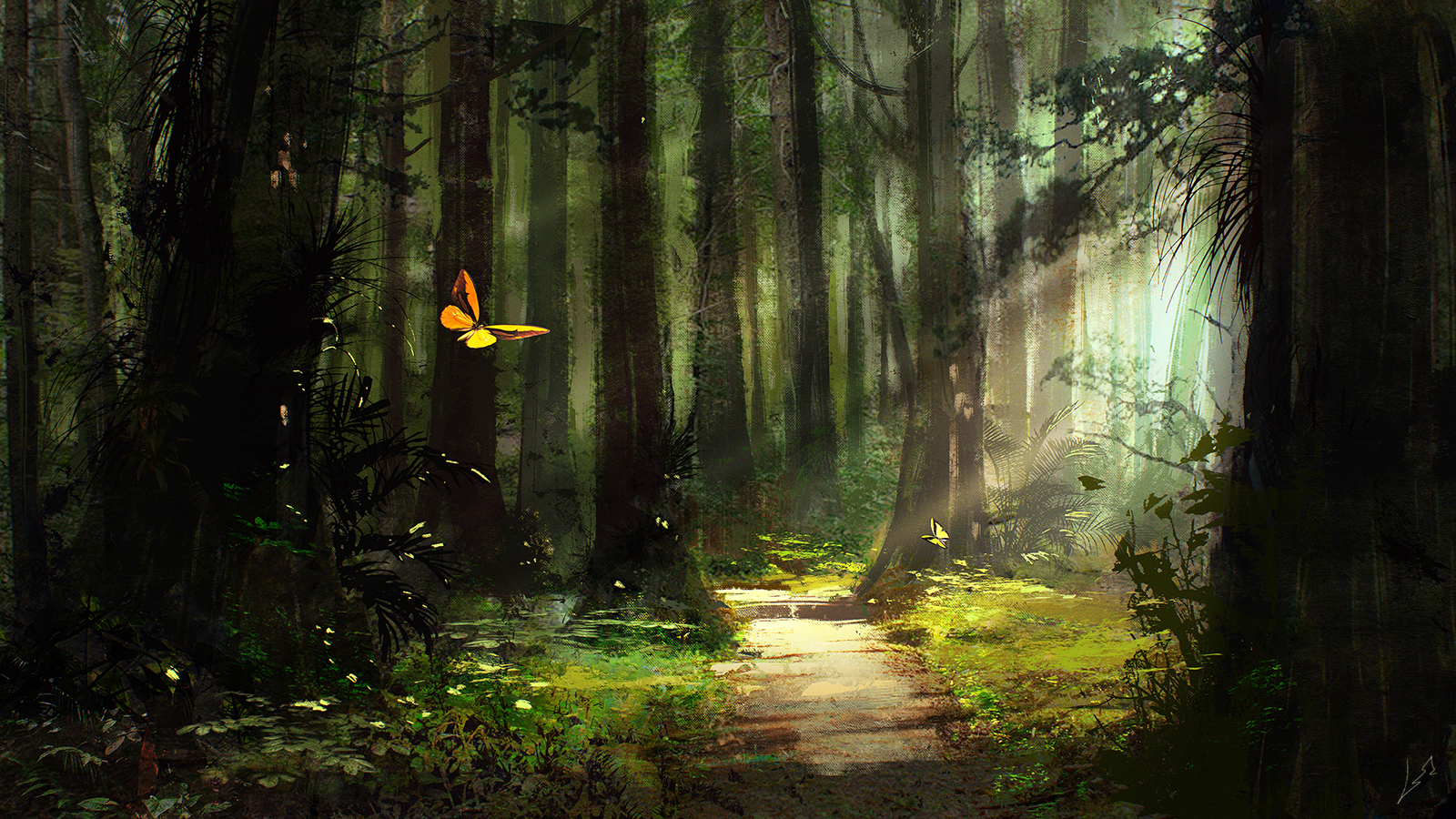 Sunlight On Butterfly In Forest Wallpaper And Background