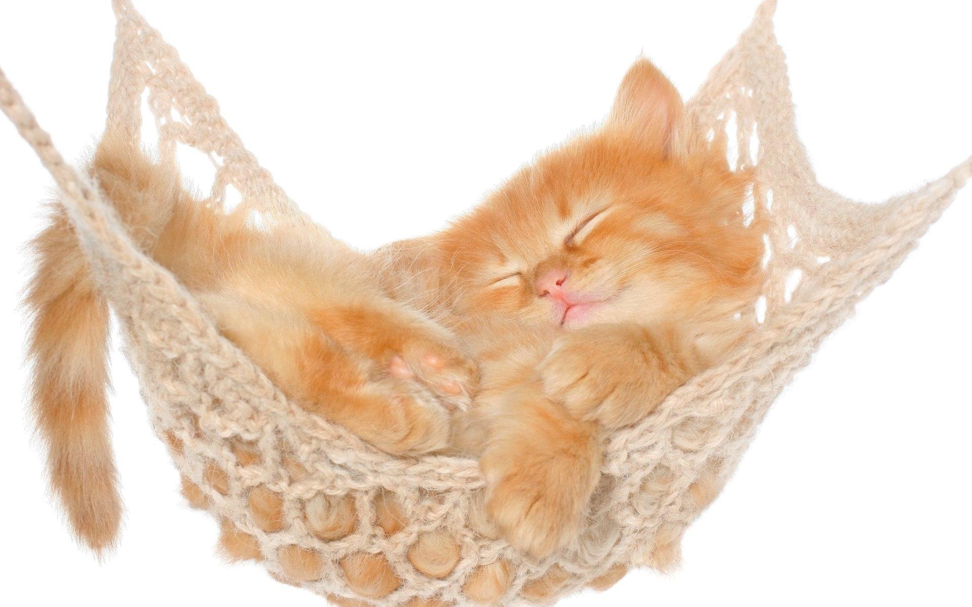 Kitten Sleeping In Hammock 4k Ultra Hd Wallpaper