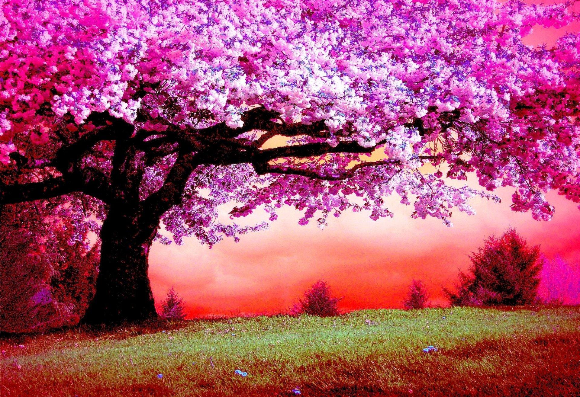 Beautiful Colorful Girls Anime Sakura Wallpaper Pink Trees Hd Wallpaper Background Image 2048x1403