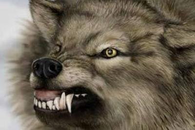 سيدة مصرية تصرع ذئبا مفترسا بعد معركة �امية الوطيس