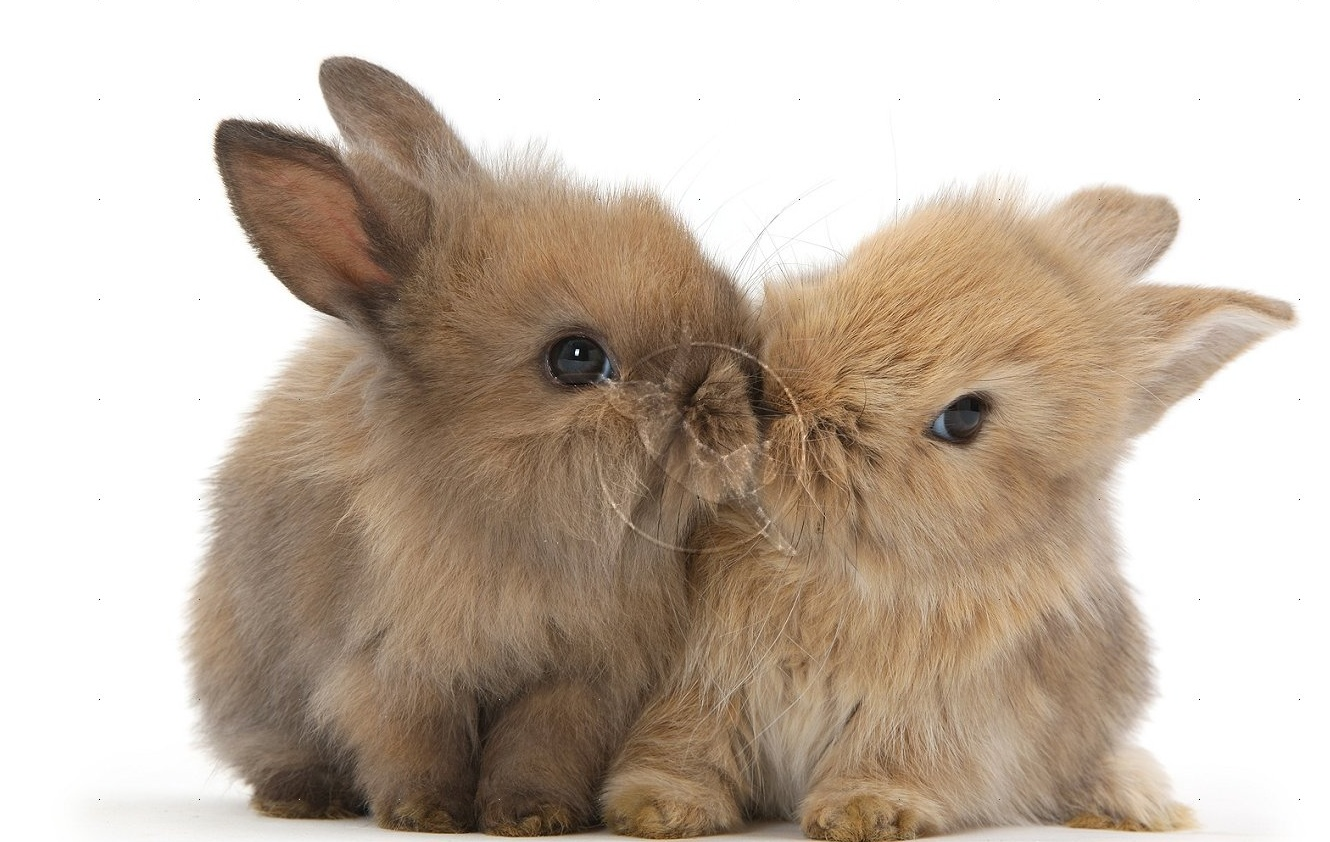 cute baby bunnies pics | cute animals images