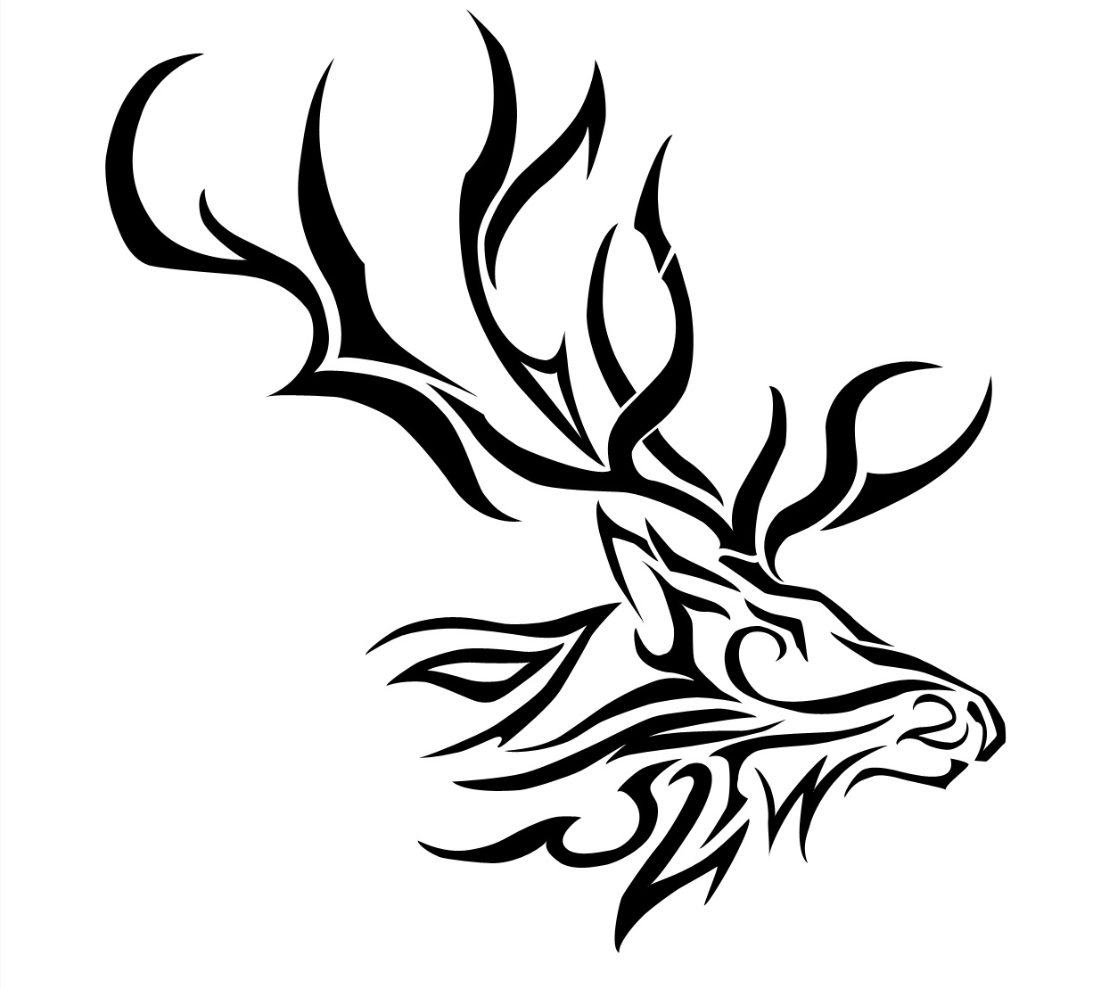 Pictures Of Elks On Animal Picture Society