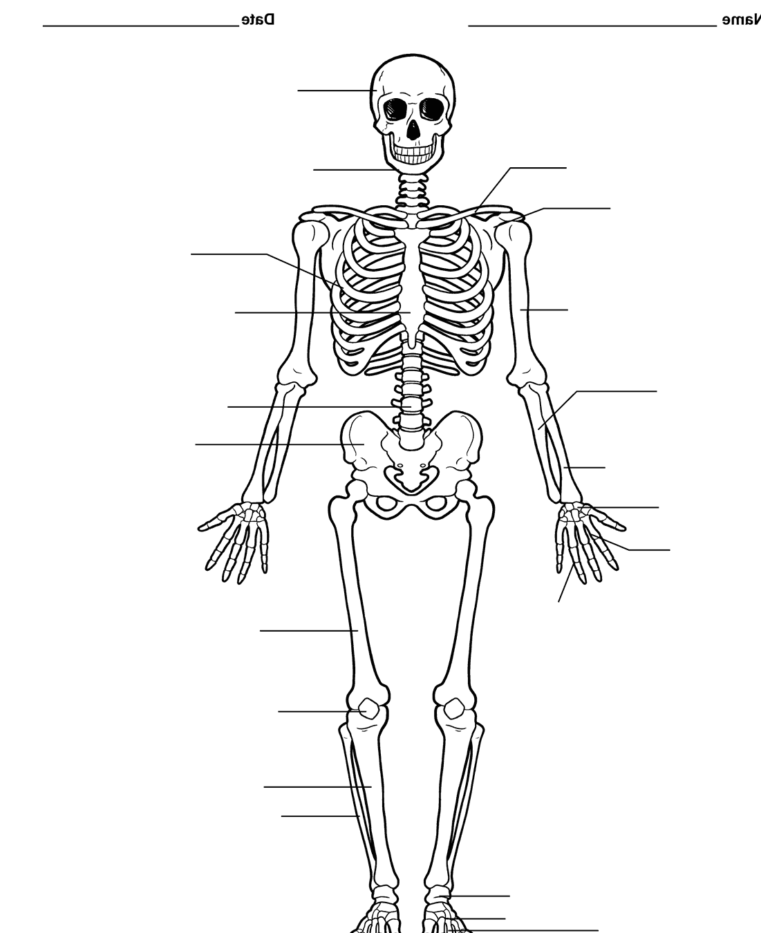 Pictures Of The Skeletal System Labeled On Animal Picture