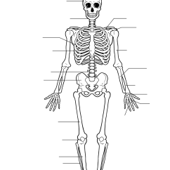 Bird Diagram Unlabeled 3000gt Wiring Pictures Of The Skeletal System Labeled On Animal Picture