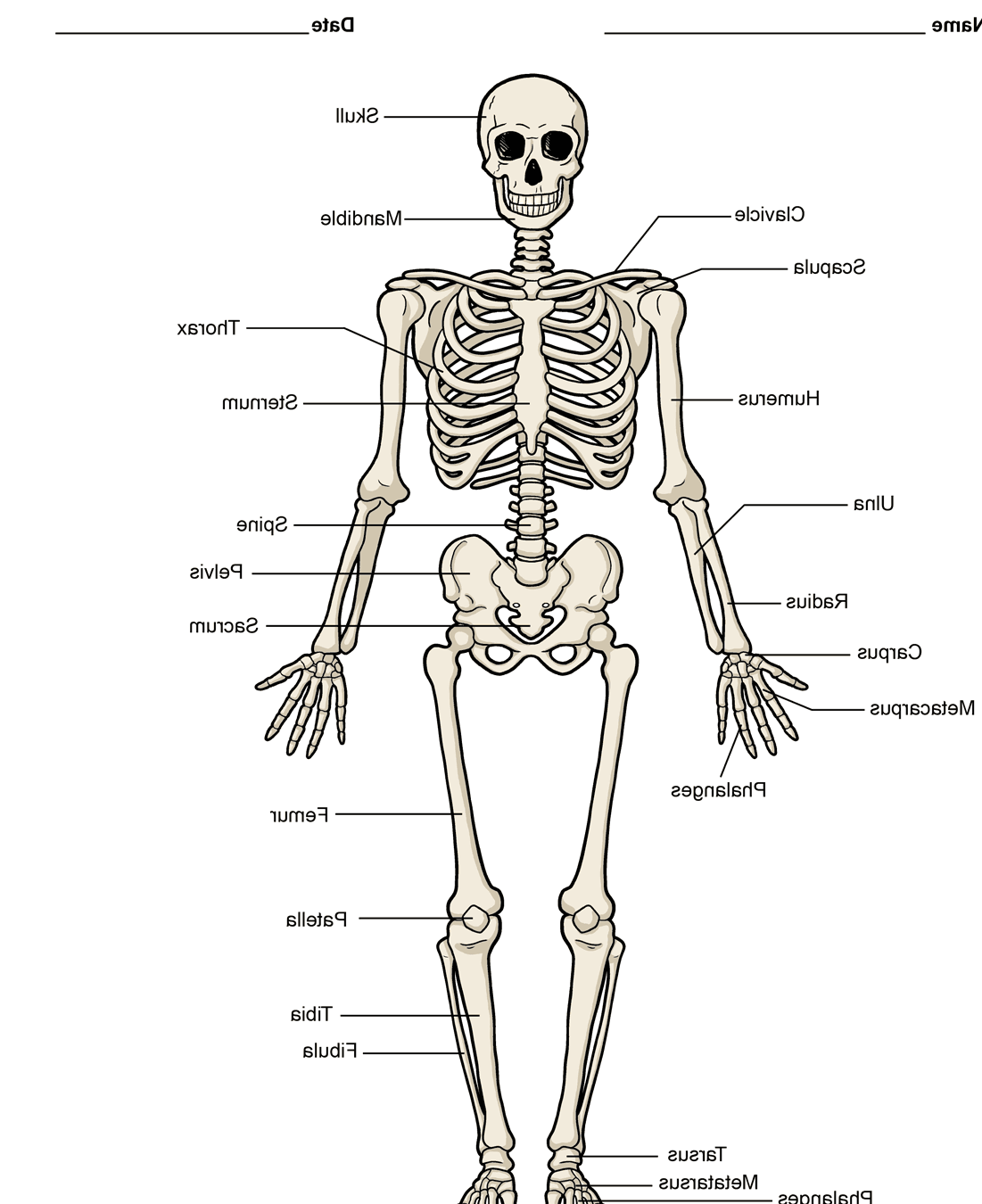 names of bones in human skeleton diagram bix block wiring picture system on animal society