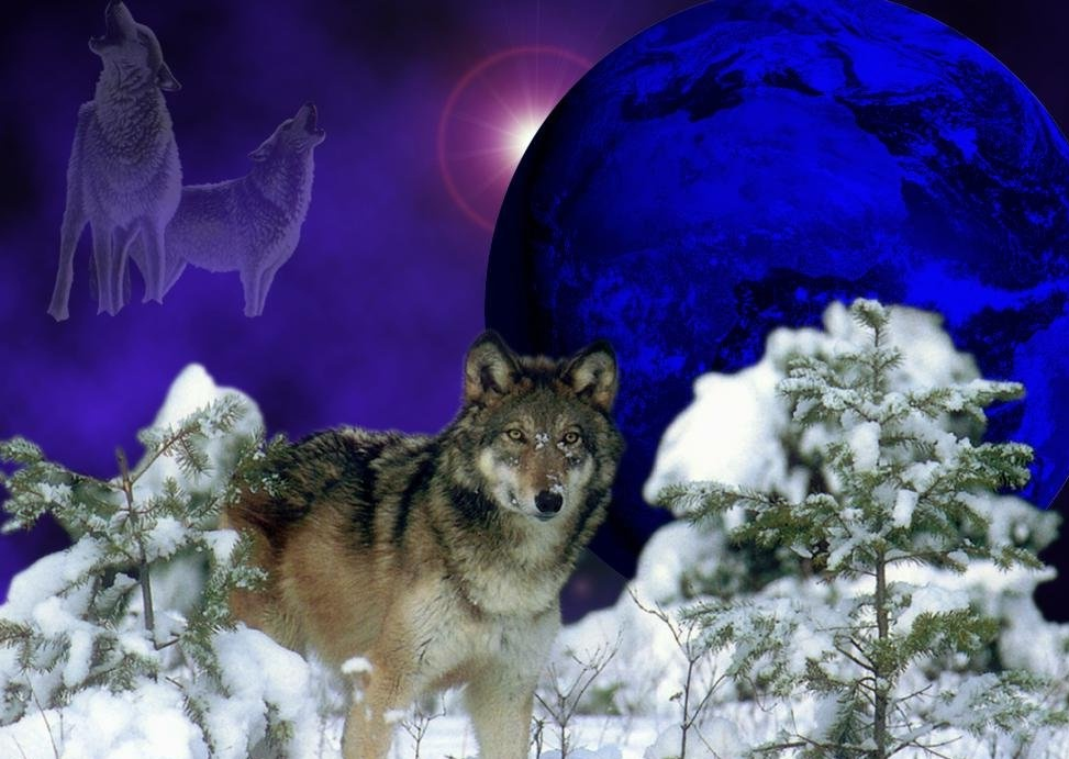 cool wolves pictures on