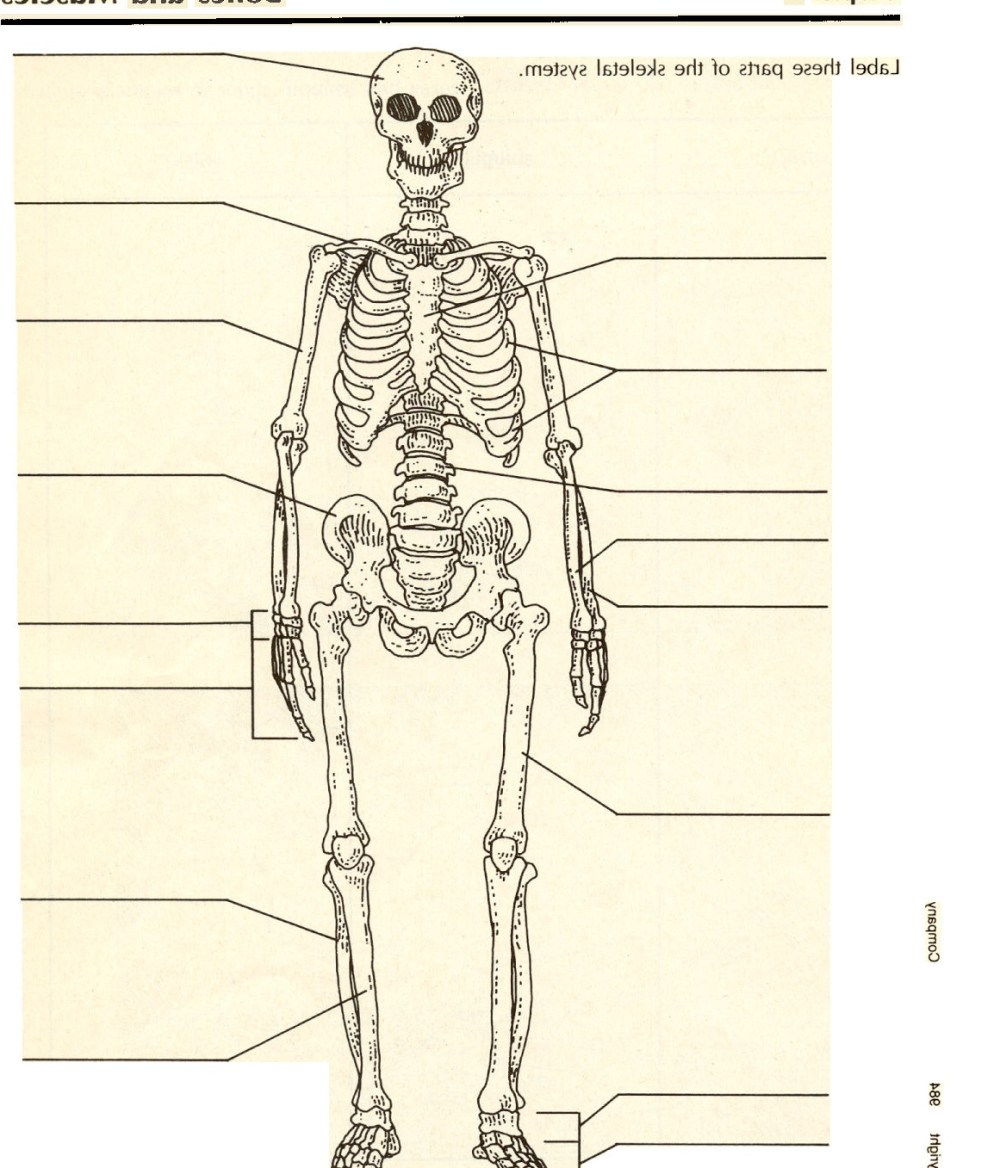 medium resolution of gallery description pictures of the skeletal system labeled