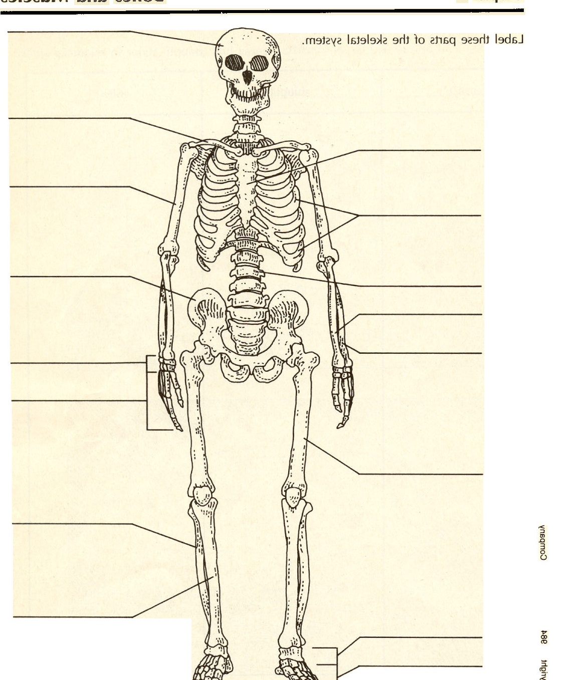 hight resolution of gallery description pictures of the skeletal system labeled