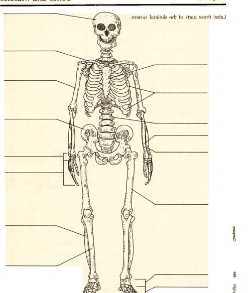 small resolution of gallery description pictures of the skeletal system labeled