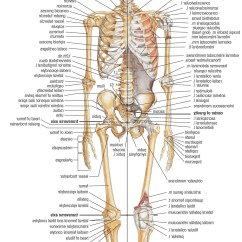 Names Of Bones In Human Skeleton Diagram Ceiling Fan Electrical Wiring Body Blank Hair