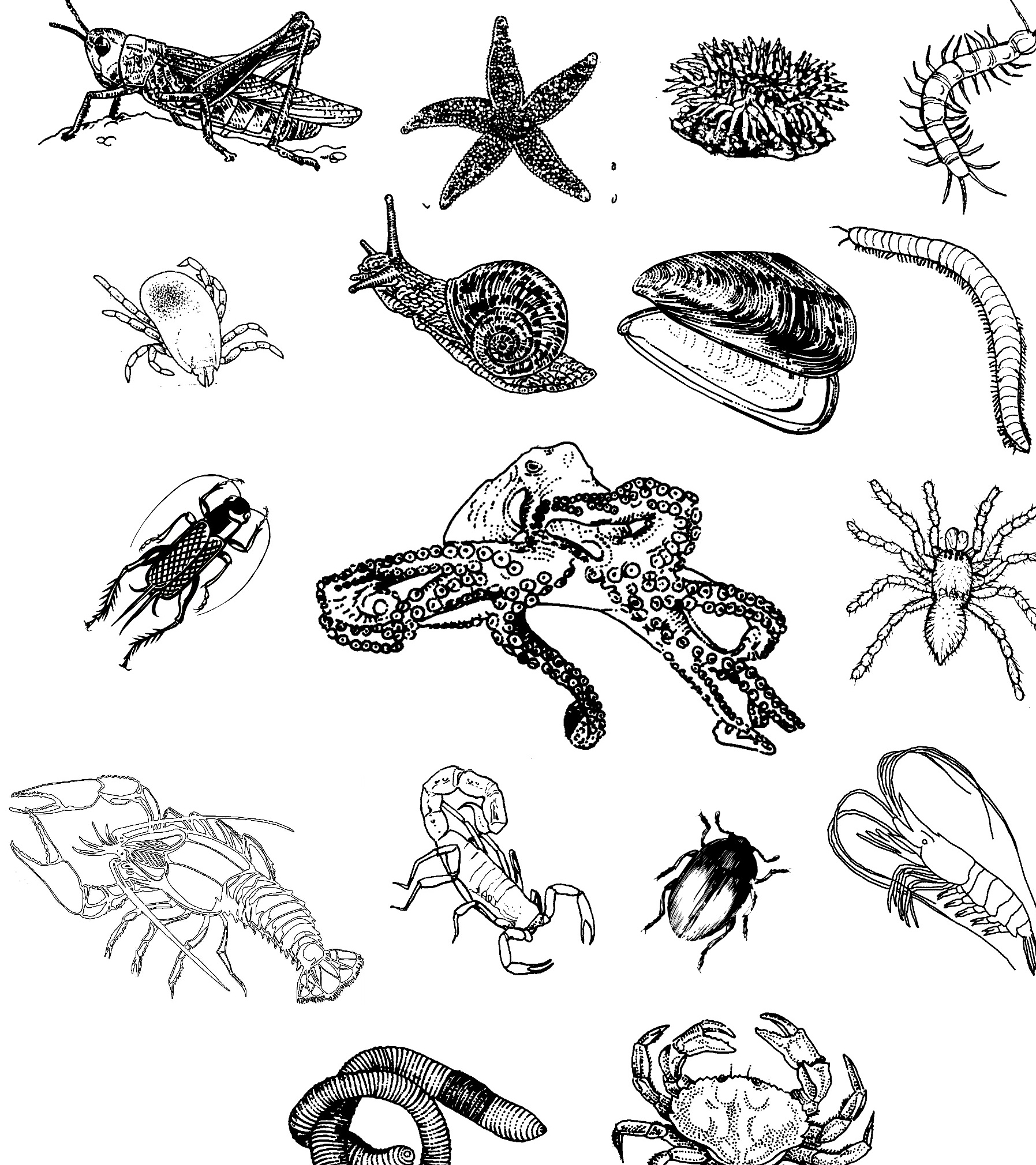invertebrate Pictures on Animal Picture Society