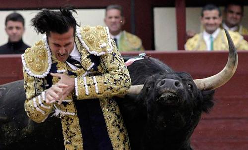 ¡Lo logramos! ¡No más dinero europeo para torturar a los toros!