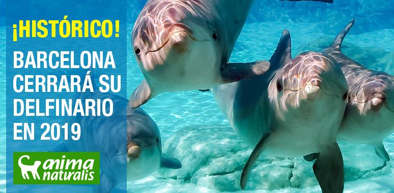 ¡Victoria! El Zoo de Barcelona cerrará su delfinario en 2019