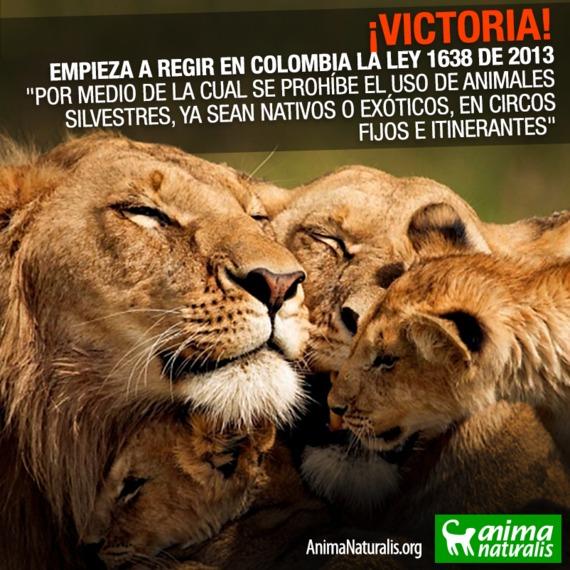 Empieza a regir ley que prohíbe animales silvestres y exóticos en circos colombianos