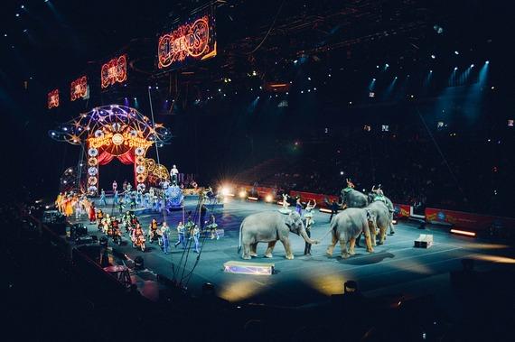 Entra en vigor ley que prohíbe uso de animales en circos
