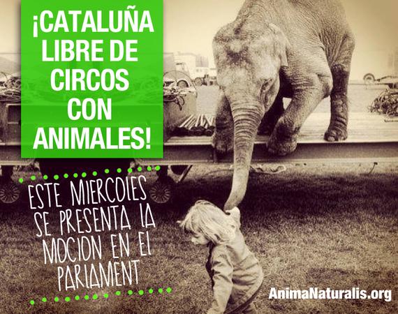 Catalunya debate la prohibición del uso de animales en circos este miércoles