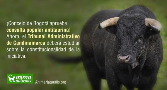 """Concejo de Bogotá dice """"Sí"""" a la Consulta Antitaurina"""