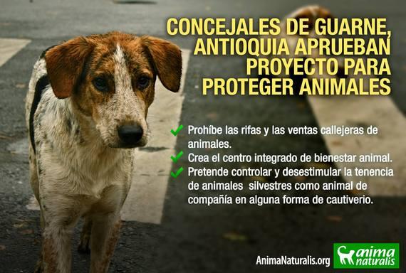 Gran noticia: Concejo de Guarne aprueba política pública para la protección integral de la fauna