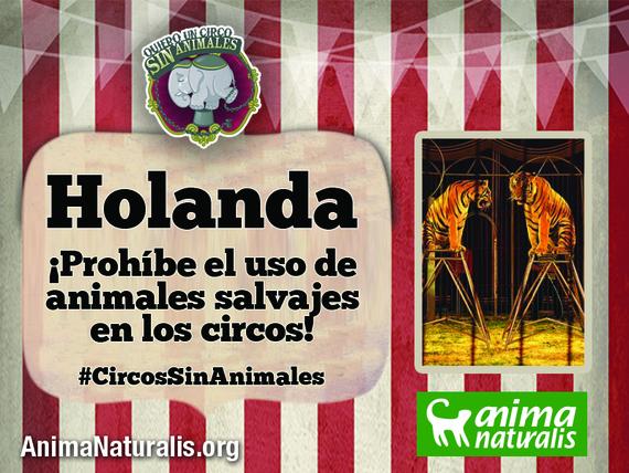 ¡Victoria! Holanda prohíbe los animales salvajes en los circos