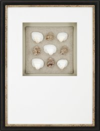 Paragon Picture Gallery 7383 Shell Collection Transitional ...